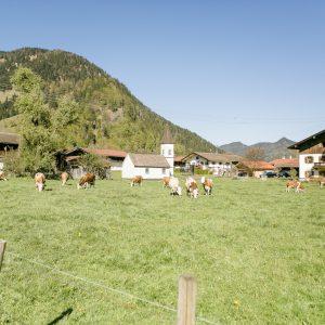 Landschaft_Sommer_Kühe (3)